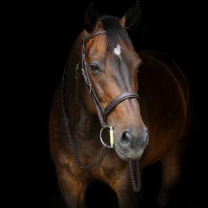 stressrelease_horse